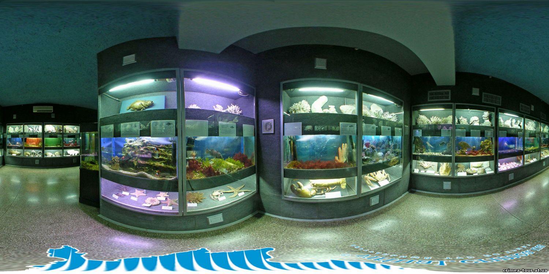 Крым, Севастополь, морской аквариум
